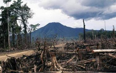 Deforestation in PNG, photo from Isidor Kaupon